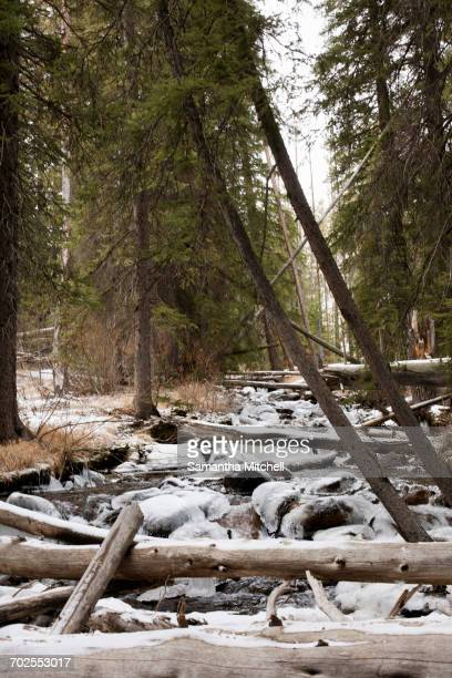 Fallen trees over icy river in Sawtooth National Forest, Idaho