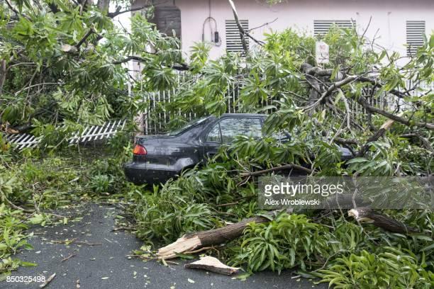 Fallen trees surround a car in the Miramar neighborhood after Hurricane Maria made landfall on September 20 2017 in San Juan Puerto Rico Thousands of...