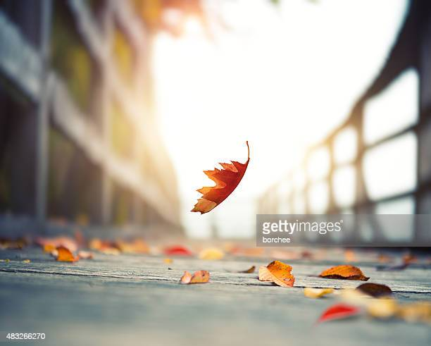 falling autumn leaf - autumn falls stock pictures, royalty-free photos & images