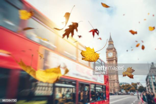 falling autumn leaves in london - londra foto e immagini stock