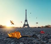 Falling Autumn Leaves In Paris
