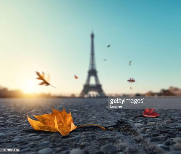 Chute des feuilles d'automne à Paris