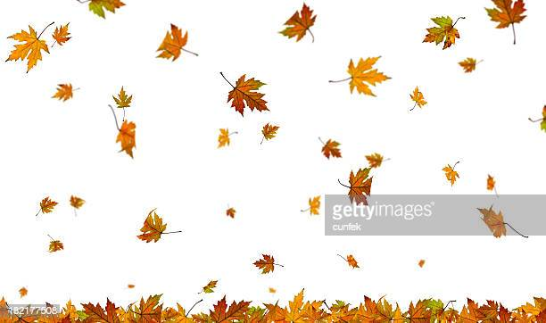 falling autumn leaves on plain white background - autumn falls stock pictures, royalty-free photos & images