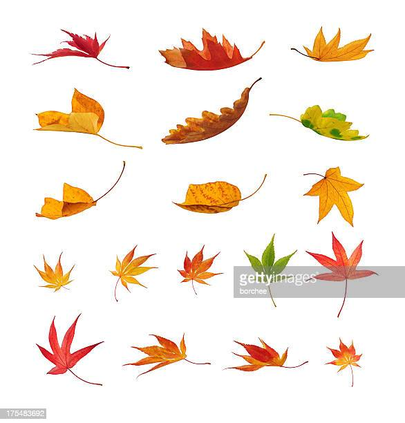 falling autumn leaves on white background - autumn falls stock pictures, royalty-free photos & images