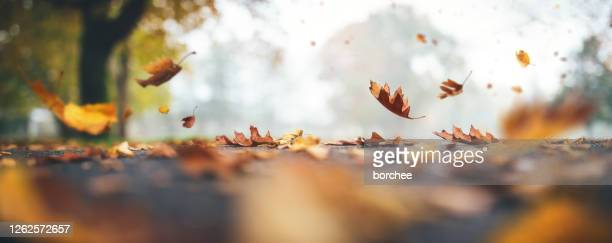 falling autumn leaves - october stock pictures, royalty-free photos & images
