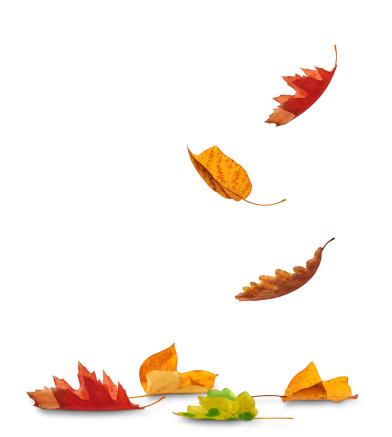 Falling Autumn Leaves 171276011