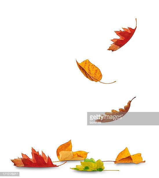 falling autumn leaves - herfst stockfoto's en -beelden