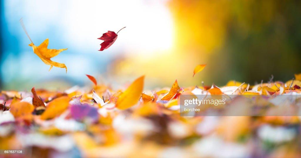 Falling Autumn Leaves : Stock Photo