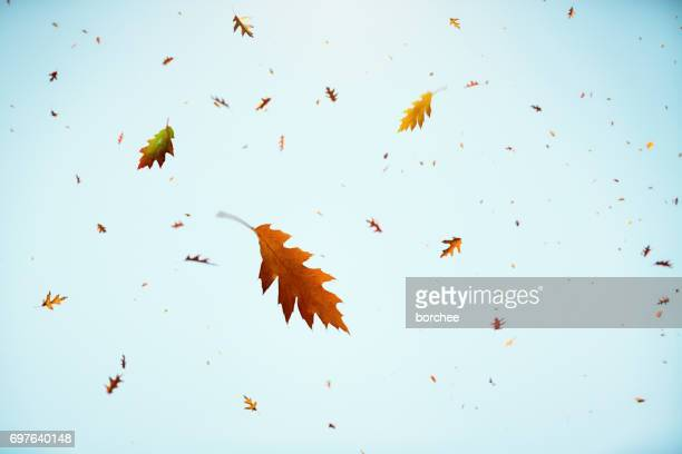 falling autumn leaves - autumn falls stock pictures, royalty-free photos & images