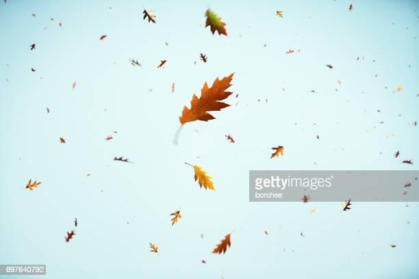 folhas de outono caindo - novembro azul - fotografias e filmes do acervo