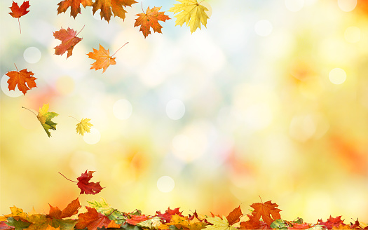 Falling autumn maple leaves natural background .Colorful foliage 858959798
