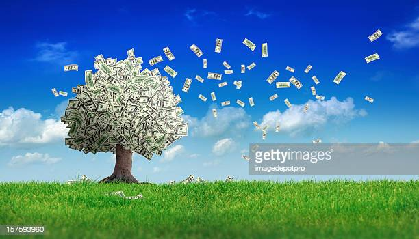 falling dollar bills from money tree - money tree stock photos and pictures