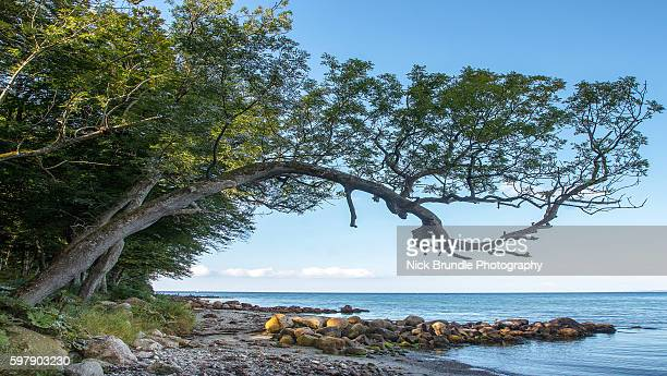 falling down - jutland stock photos and pictures