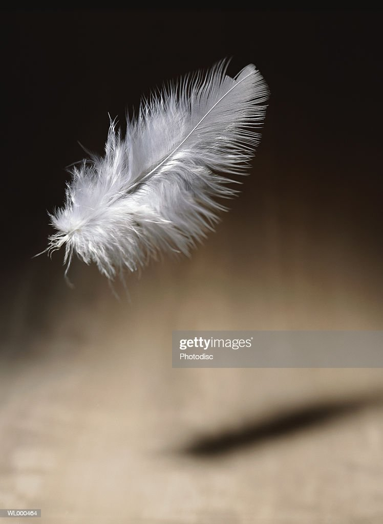 Falling Feather : Stock Photo