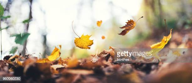 falling from the tree - autumn leaf stock pictures, royalty-free photos & images