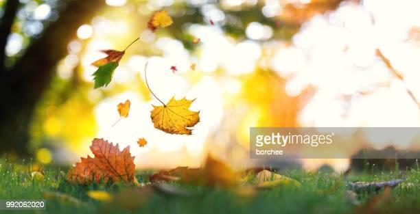 falling from the trees - autumn falls stock pictures, royalty-free photos & images