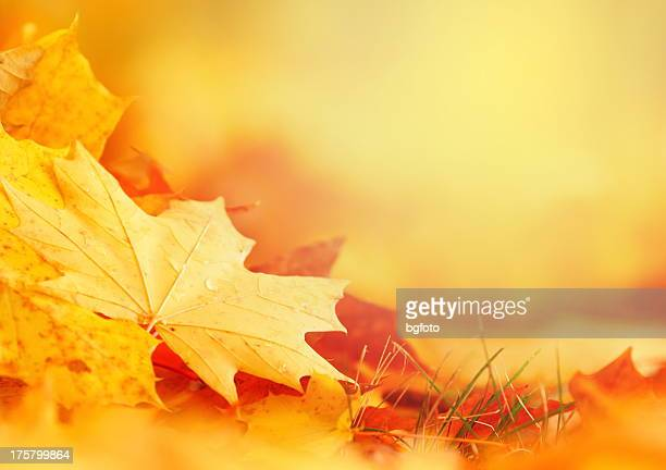 falling leaf frame - autumn falls stock pictures, royalty-free photos & images