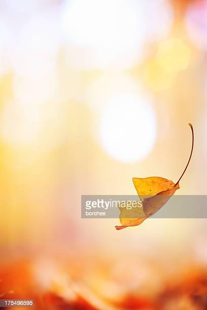 Falling の葉