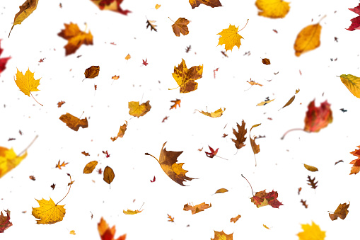 Falling Leaves On White Background 992070874