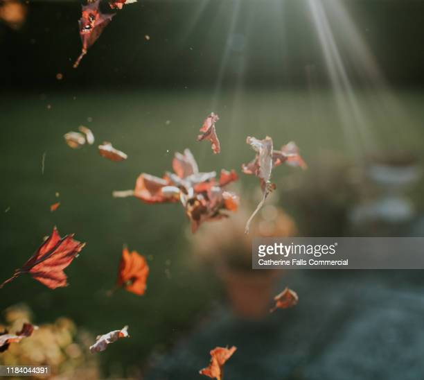 falling leaves - september stock pictures, royalty-free photos & images