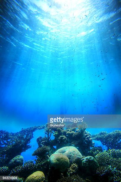 falling light to the corals - reef stock pictures, royalty-free photos & images
