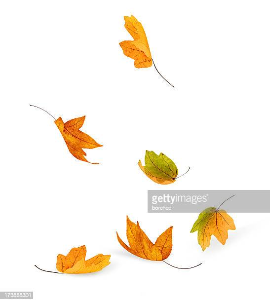 falling - autumn falls stock pictures, royalty-free photos & images