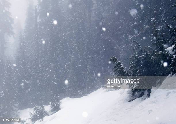 falling snow near forest. - blizzard stock pictures, royalty-free photos & images