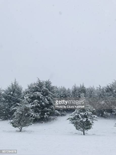 falling snow - laura woods stock pictures, royalty-free photos & images