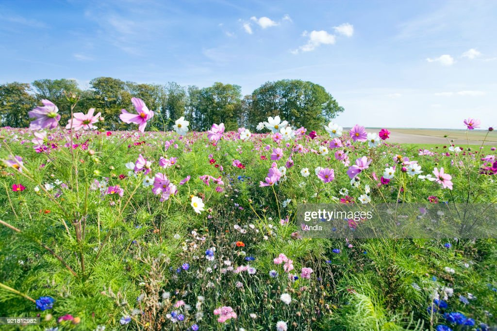 Fallowing land in flower in spring.