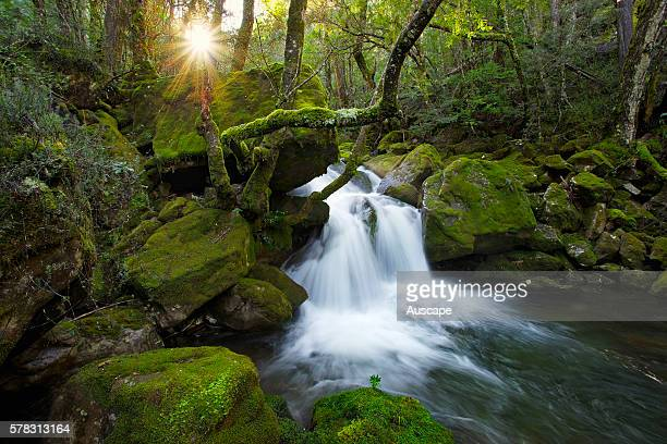 Falls on Mother Cummings Rivulet in Meander Forest Reserve, Great Western Tiers, Tasmania, Australia.