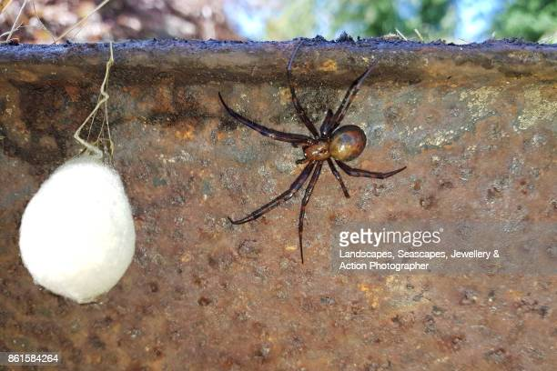 World S Best Spider Egg Sac Stock Pictures Photos And