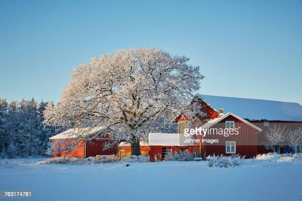 Falun red houses in winter scenery