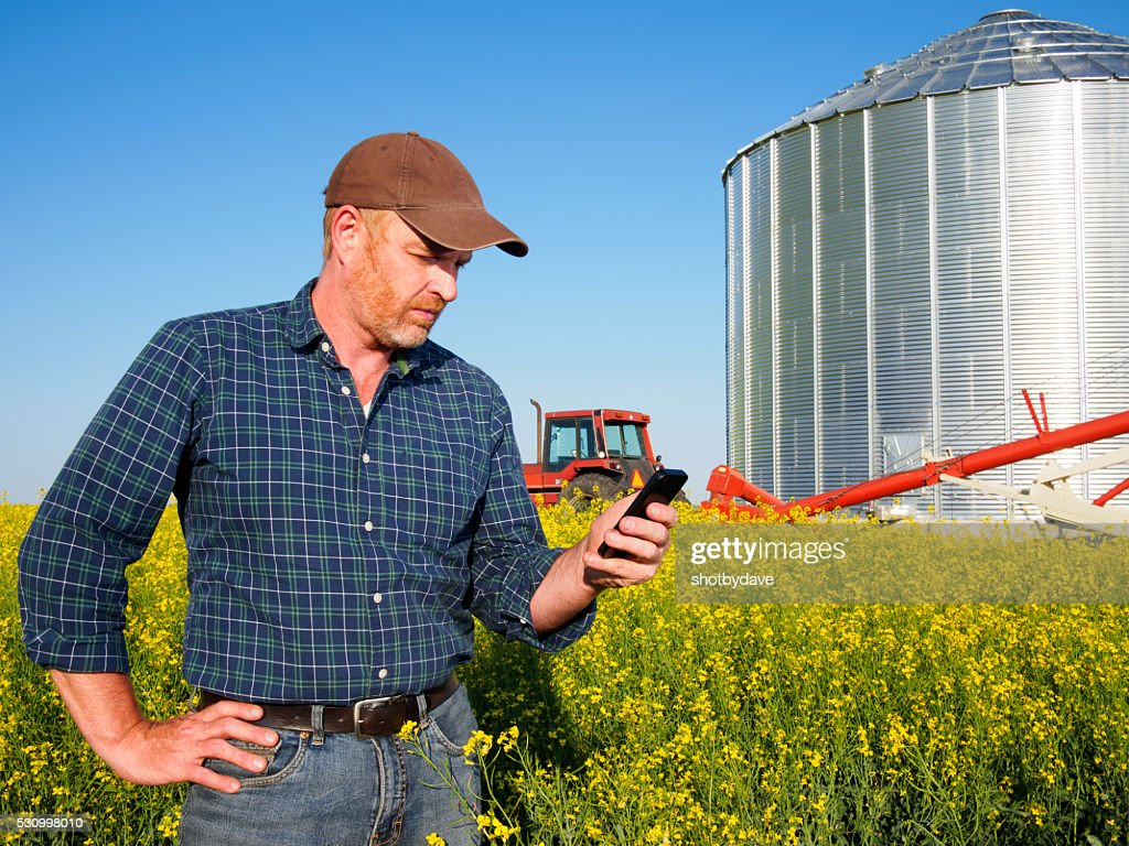 Famer, silo, tractor and canola crop : Stock Photo