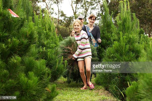 Families choose their own Christmas Tree from the Sydney Christmas Tree Farm in Duffy's Forest on December 18 2010 in Sydney Australia Tree shoppers...