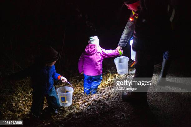 Families with buckets carry frogs along a road in Kranj to help them cross during an action for protection of migrating amphibians. The Institute of...