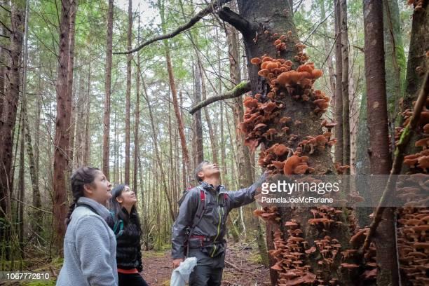 Familie bewonderen van eetbare honing paddestoelen groeien op boom in het bos