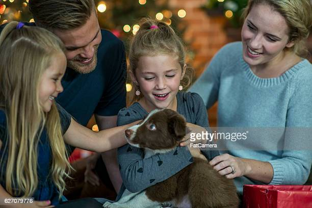 family adopting a new puppy at christmas - fat hairy men stock photos and pictures