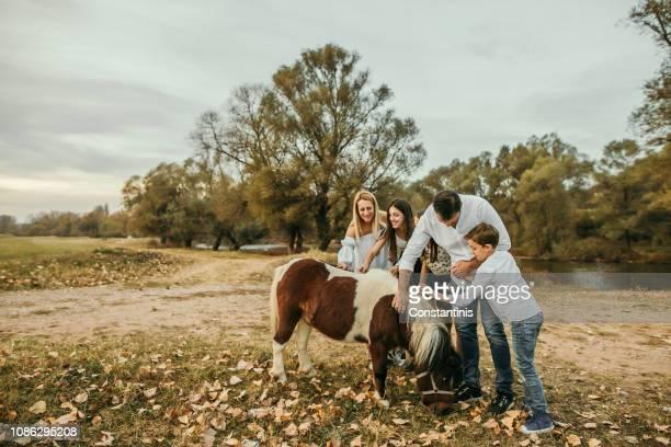 familjeäventyr med little pony - pony play bildbanksfoton och bilder