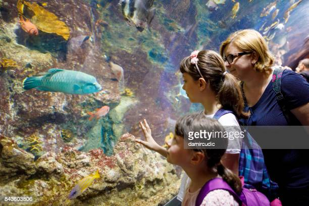 Aventures familiales dans l'énorme aquarium