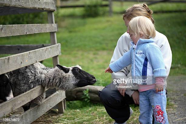 family, animals, experience, discover, child, farm, animal
