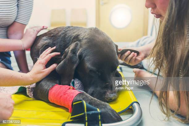 family around dying dog - euthanasia stock pictures, royalty-free photos & images