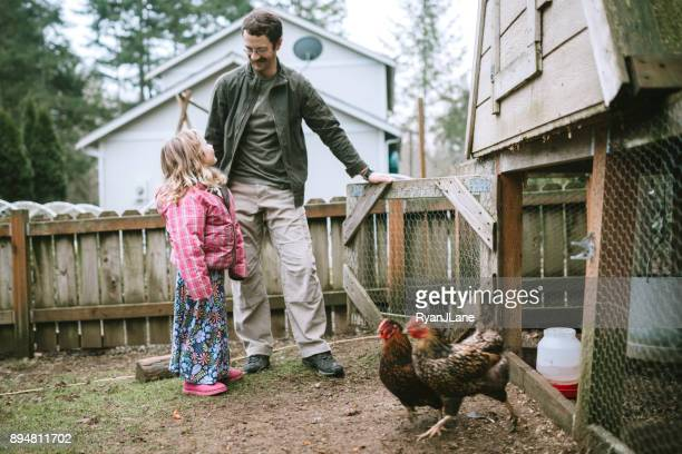 family caring for their chickens - chicken coop stock pictures, royalty-free photos & images