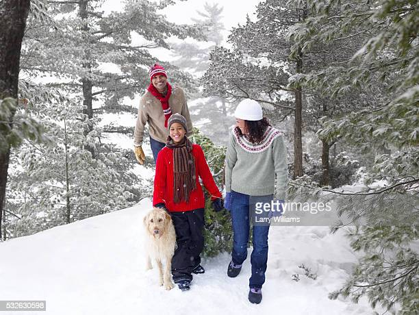 family carrying fresh cut christmas tree - african american christmas images stock pictures, royalty-free photos & images