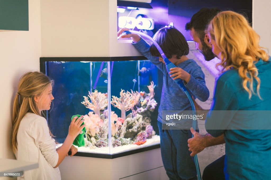 Family cleaning reef tank : Stock Photo