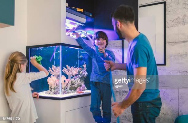 familie reinigung riffaquarium - aquarium haustierbedarf stock-fotos und bilder