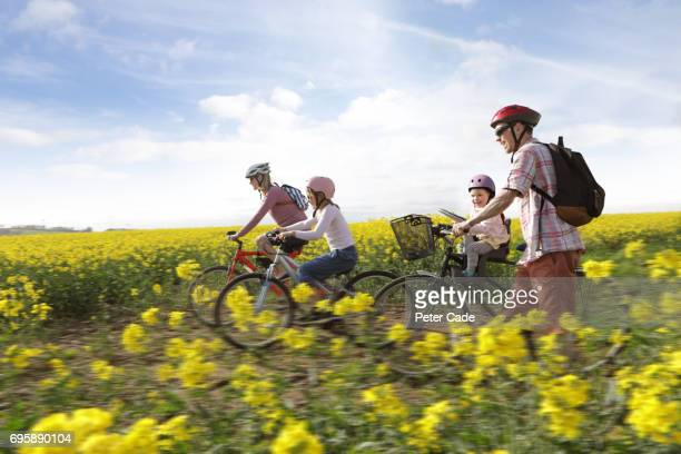 family cycling through rape seed field - four people stock pictures, royalty-free photos & images
