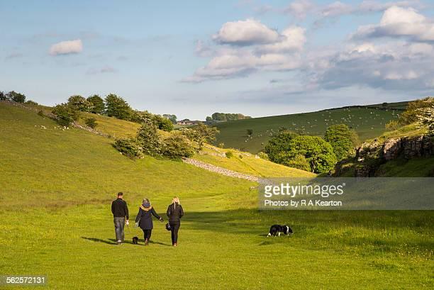 Family dog walking in Lathkill Dale, Monyash