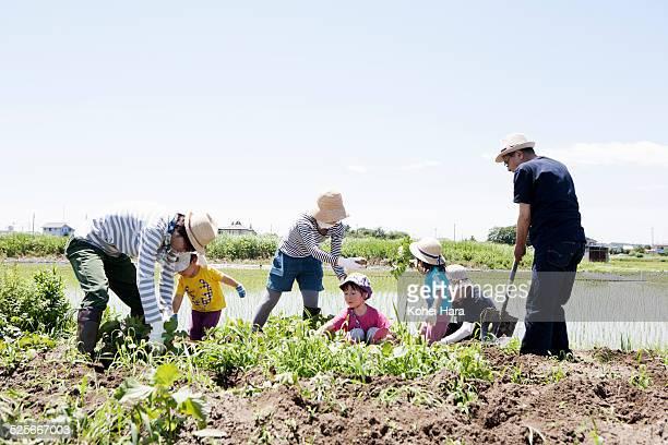 family doing farm work - シンプルな暮らし ストックフォトと画像