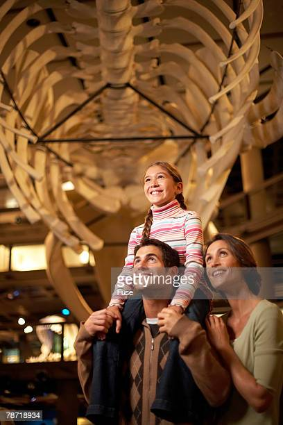 family enjoying a museum exhibit - natural history museum stock pictures, royalty-free photos & images