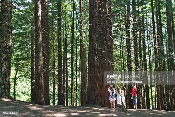 Family enjoying nature and taking pictures of redwood trees